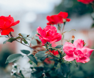 flora, flowers, and roses image
