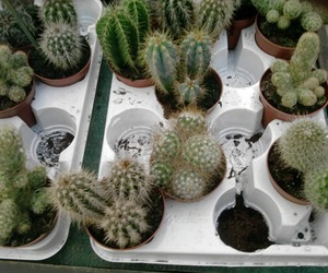 cactus, pale, and plants image