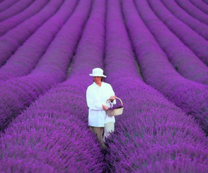 purple, lavender, and flowers image