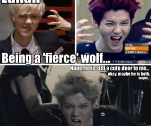 exo, luhan, and wolf image