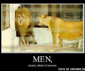 funny, lion, and marriage image