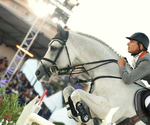 horse, riding, and show jumping image