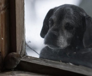 dog, mouse, and window image