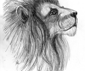 cool, lion, and sketch image