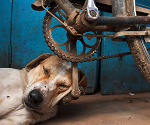 dog, animal, and bike image