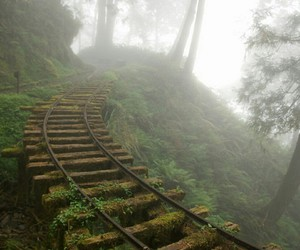 forest, place, and rail road image