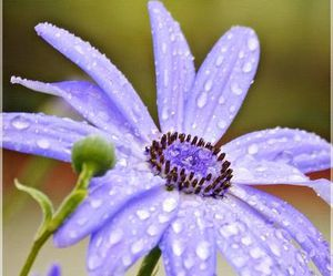 dew, flower, and kissed image