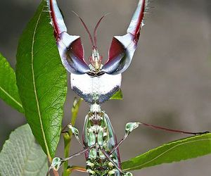 bug, insect, and mantis image