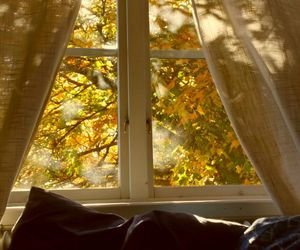 autumn, fall, and window image