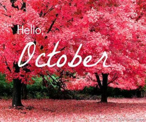 hello, autumn, and pink image