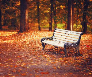 autumn, bench, and park image