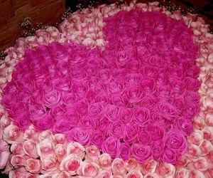 rose, love, and pink image