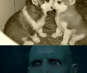 voldemort, xD, and pobre :( image