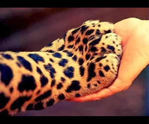 animal, leopard, and hand image