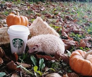 pumpkin, hedgehog, and starbucks image