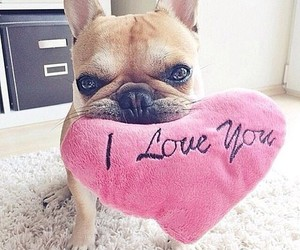 dog, love, and cute image