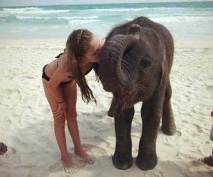 elephant, girl, and beach image
