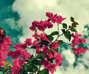 blue, clouds, and flowers image