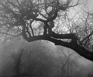 tree, black and white, and cemetery image