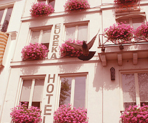 flowers, pink, and hotel image