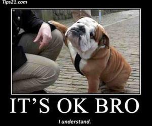dog, funny, and bro image