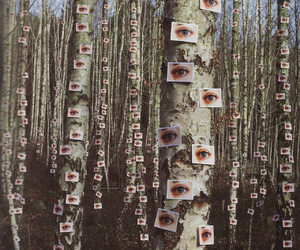 eyes, tree, and forest image