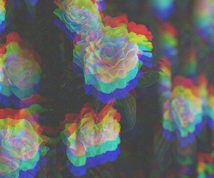 flowers, rose, and 3d image
