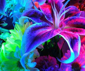 flowers, neon, and colorful image