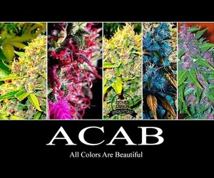 colours, ganja, and acab image