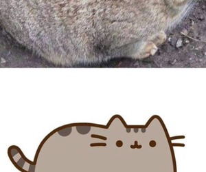 cat, pusheen, and gray image