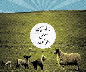 arabic, sheep, and خروف image