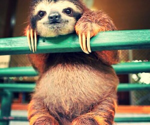 sloth and cute image