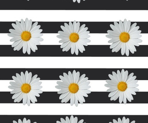 background, daisies, and daisy image