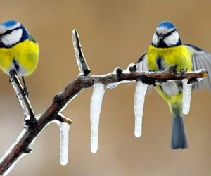 beautiful, birds, and branch image