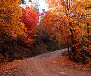 fall, leaves, and road image
