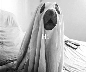 dog, hi, and ghost image