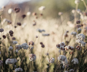 lavender, nature, and flower image