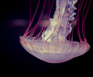 jellyfish, sea, and water image