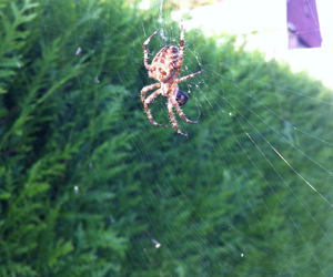 biology, nature, and spider image