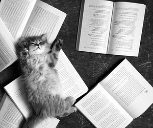 animal, books, and b&w image