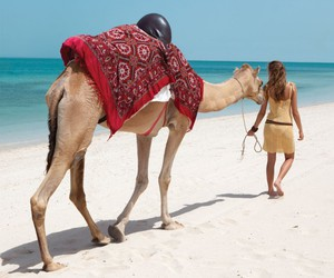 beach, brunette, and camel image
