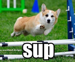 dog, sup, and funny image