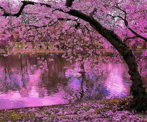 pink, rosa, and tree image