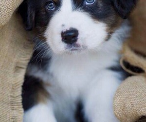 cute, animal, and puppy image