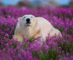 bear and flower image