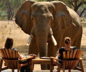 africa, game, and wildlife image