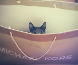 animal, cat, and Michael Kors image