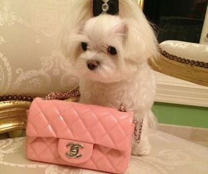 chanel, pink, and puppy image