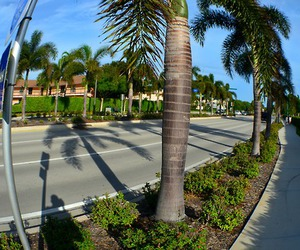 california, palm trees, and summer image