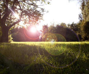 green, lens flare, and summer image